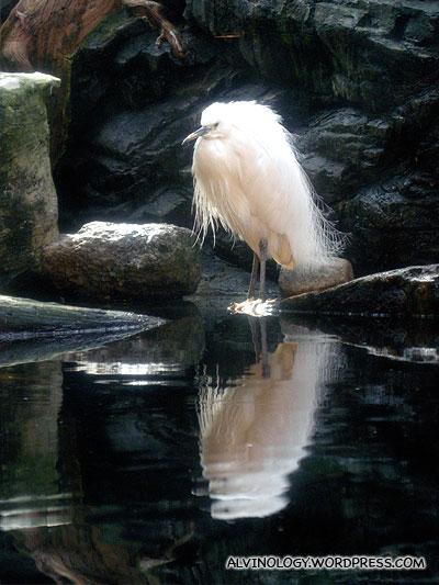 Elegant white crane
