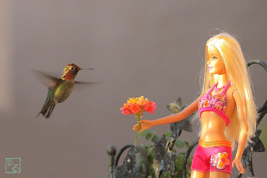Anna's Hummingbird 051011