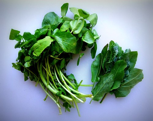 watercress and sorrel 1