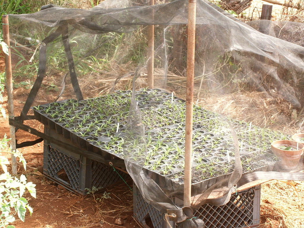 30% shade cloth structure for Puya seedlings