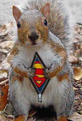 SuperSquirrel