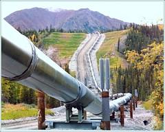 Trans-Alaskan Pipeline 1975-78 (saintpo2007@yahoo.com) Tags: mountain alaska landscape squirrel heatexchanger pipline squirrelcreek