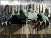 DEDICADA A MAYTEVIDRI (ABUELA PINOCHO ) Tags: madrid españa agua arte fuente escultura rana retiro bronce chorro allyouneedislove mywinners tepasaste citrit heartawards a3b cerditosmutantes everydayissunday