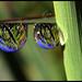 The Green, Green Grass of Summer - by ecstaticist