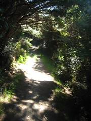 Sun through the trees (B A Hockman) Tags: newzealand sun bike freedom riding nz mtb southisland ontheroad touring onthetrail queencharlottesound singletrack queencharlottetrack onyerbike marlboroughexploration