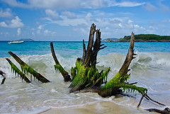Driftwood on Cinnamon Bay