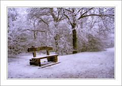 Snowy Dusk (szefi) Tags: trees winter white snow cold nature landscape frost hungary budapest canon350d hdr naturesfinest tonemapping rimfrost diamondclassphotographer