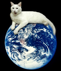 Top of the World ~(CatChallenge#23)~ (Gravityx9) Tags: friends fab stilllife photoshop altered movie fluffy chop fabulous multicolored picturesque magical mage litterbox outofthisworld specialeffects sfx 0108 blogthis smorgasbord atoz ithink oneearth global2 photosmiles youlookinatme americaamerica dirtyword whathaveyoudone creativephoto namethemovie flickrcats fineartphotos mywinners abigfave goldseal platinumphoto 012008 anawesomeshot bluelicious wowiekazowie picturepages kittycrown catchallenge ilovemypic creativephotographers anythingdigital smileabout romair adorablecritters everydayissunday lovethefeline yourpreferredpicture 20cats 10cats 30cats clevercreative 50cats psfofamily totalphotoshop 40cats avision animalsarebeautiful catchallenge23