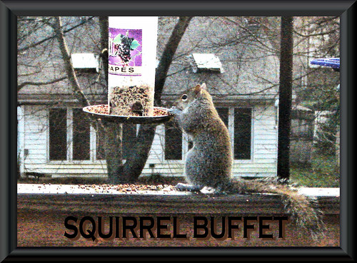 squirrel Buffett