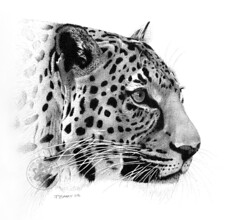 Leopard (pbradyart) Tags: portrait bw art pen ink sketch artwork drawing soe pointillism naturesfinest 50faves 10faves 35faves 25faves golddragon artlibre platinumphoto aplusphoto superbmasterpiece diamondclassphotographer flickrdiamond megashot allin1 onlythebestare 200850plusfaves 75faves platinumheartaward artinbw bwartaward goldstaraward flickrestrellas exquisiteimage spiritofphotography