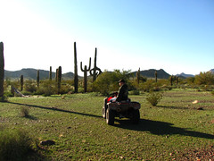 In The Shadow of the Valley (Yieldsigns76) Tags: shadow arizona cacti desert valley craig alive craigers