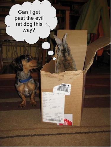 Evil rat dog