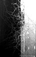 buena tela (Felipe Smides) Tags: chile blackandwhite art blancoynegro photoshop spider arte s araa felipe telaraa artisticexpression mywinners abigfave aplusphoto beatifulcapture artlegacy artinbw smides fotografiasmides funfanphotos felipesmides
