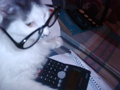 Vieji (*Tosh*) Tags: cat kitty gata lentes cuaderno calculadora estudiosa