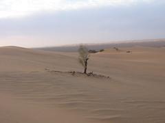 photo 034 (Algerina 22) Tags: sahara algeria algrie   djanet