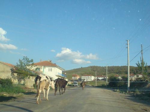 köye dönüş
