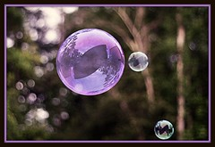 Life is really simple, but we insist on making it complicated.  ~Confucius ( dragonflyriri  (Limited Flickr Time)) Tags: trees 3 reflection fun purple bokeh violet lavender saturday bubbles ps round bubble iridescent img3046 hpps cmwdpurple happyperfectpurplesaturday lifeisreallysimplebutweinsistonmakingitcomplicated~confucius