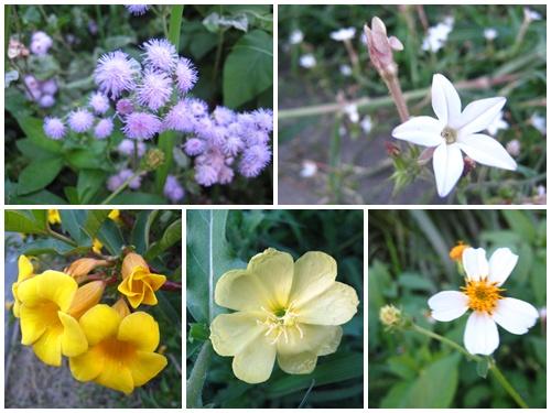 你拍攝的 野花。