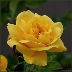 Faa da sua vida um Jardim!   Feliz Quinta-Flor (AvQuu) Tags: fantasticnature impressedbeauty absolutelyperrrfect mygearandme natureskingdom virgilio~gf ringexcellence