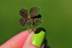 photo trèfle à quatre feuilles 4