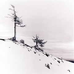 The zen of Trees (Zeb Andrews) Tags: trees winter blackandwhite snow mountains film oregon square landscape view views mthood pacificnorthwest fujineopan400 timberlinelodge tacomaartmuseum hasselblad500c bluemooncamera zebandrews nwlandscapes zebandrewsphotography