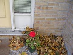 Nov. 6, 2007