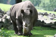 IMG_4715_emmen (Arie van Tilborg) Tags: zoo dieren emmen noorderdierenpark dierentuin mediacollege arievantilborg