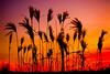 Winter Sunset Behind the Grass (Russ Beinder) Tags: sunset topf25 grass silhouette topv111 topv555 topv333 bc topv1111 topc50 topc75 topv999 topc100 getty topv777 portcoquitlam castlepark challengeyouwinner platinumphoto colorphotoaward diamondclassphotographer flickrdiamond 2007120800026 platinumsuperstar