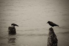 B_DSC_5814_web800 (Grumblehog) Tags: seattle beach water blips goldengardens blip seasky