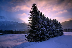 Handful of Pine trees (labareda photo) Tags: pinetree alpes austria montain saalbach hinterglemm