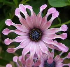 pink beauty (baltic_86 (mostly off)) Tags: pink usa flower nature natura kwiat virigina instantfave rozowy abigfave platinumphoto baltic86
