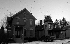 Murder in South Wedge (-dangler) Tags: houses ny newyork birds dark flock goth evil creepy rochester spooky doom horror murder gloom crows raven southwedge