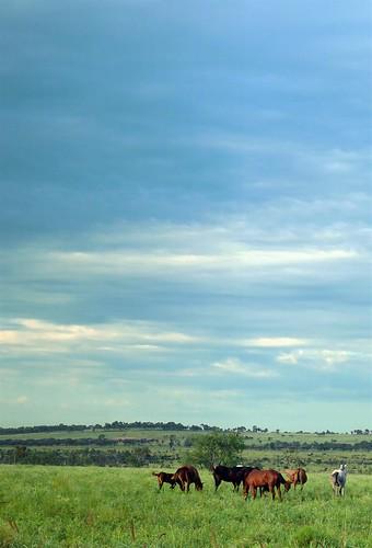 Horses near Moranbah by mcmahong.