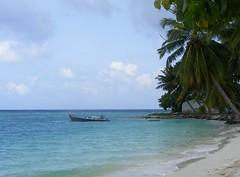 | not quite pristine | (chaosmaldives) Tags: ocean blue trees sea beach nature islands boat waves natural wind coconut lagoon palm greenery breeze maldives dhoni maldivian