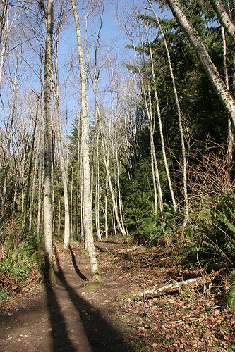 Cougar Mountain - Issaquah