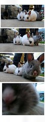 We didn't so much as pick Emily ~ she picked us :  ) (Lara's  Stuff) Tags: cute rabbit bunny adorable hiemily nosybunny