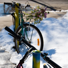 Spring, with bicycles