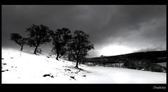 Dunlichity (Craig Robertson) Tags: snow tree landscape scotland highlands dunlichity platinumphoto