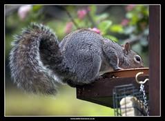 water feeder
