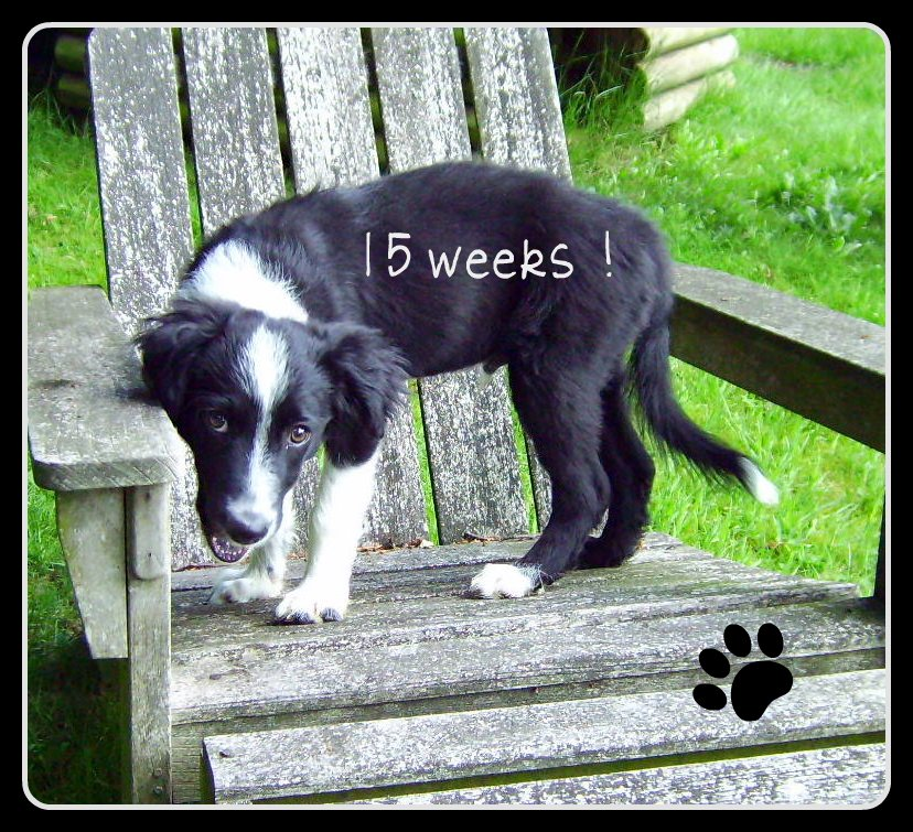 15 weken oud !