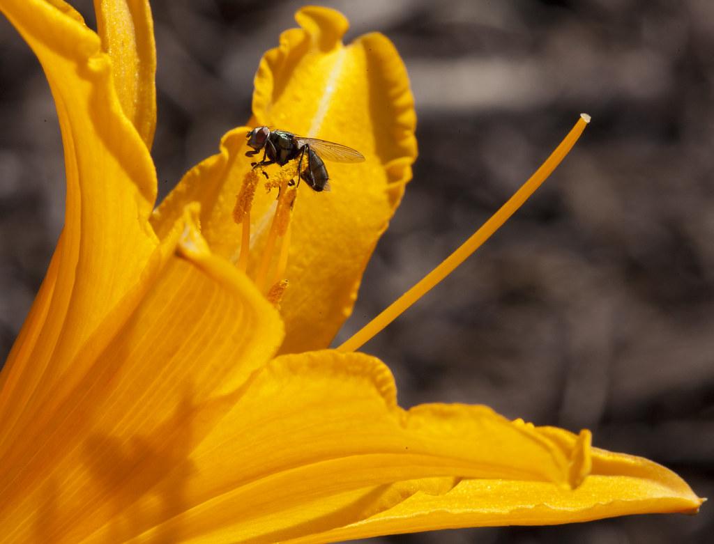 IMAGE: http://farm3.static.flickr.com/2368/5696470521_a71db739aa_b.jpg