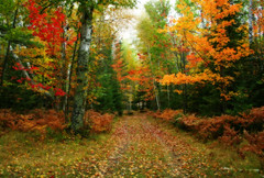 Autumn in Watercolor (nature55) Tags: autumn fall nature wisconsin fun outdoors orton supershot nature55 platinumphoto anawesomeshot