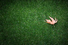 Fall's coming (~mohsentaleb) Tags: green fall grass leaf clean lensekhaste