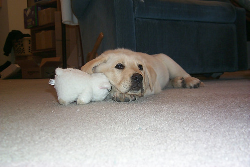 012702_05_new_puppy_with_stuffed_toy