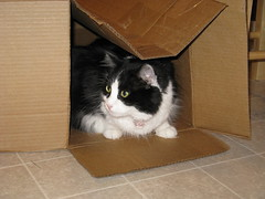 Josie in the box