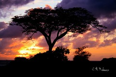 Tinian Sunset of the Flame Tree 2 (topofbroadway) Tags: sunset beautiful rainforest paradise wwii favorites jungle tropical popular commonwealth worldwar flametree saipan micronesia cnmi tinian tropicalsunset neltner golddragon argosycasino northernmariannaisland topofbroadway northernmariannaislands topofbroadwaycrneltner crneltner chrisneltner northernmariannasislands saipanislandisland topofbroadwaytopofbroadway
