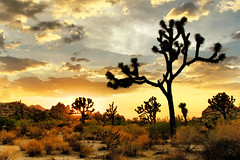 Joshua Tree NP, CA, USA (Peter Bongers) Tags: california travel light sunset sky usa sun landscape joshuatree terdata nikonstunninggallery peterbongers
