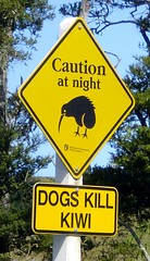 Dogs Kill Kiwi (tm-tm) Tags: newzealand dogs sign warning nz signage northisland northland kiwi aotearoa oceania yellowwarningsign animalwarningsign
