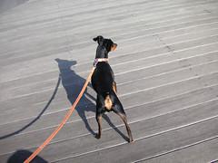 城南島海浜公園を移動中の犬