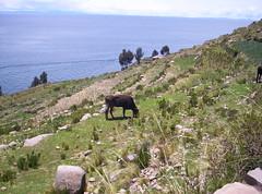 Isla Taquile (Grabby Walls) Tags: travel lake peru titicaca america lago south per viaggi taquile isla viaggio sud isola viaggiare grabbywalls